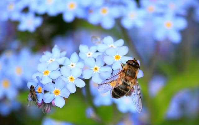 Believe the Buzz: The Annual Beekeeping and Honey Festival Is Worth a Visit