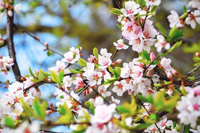 The Subaru Cherry Blossom Festival of Greater Philadelphia Returns This Weekend